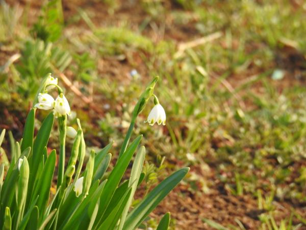 170320春の芽吹き_3