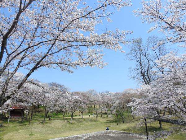 170414桜川_風土記の丘3