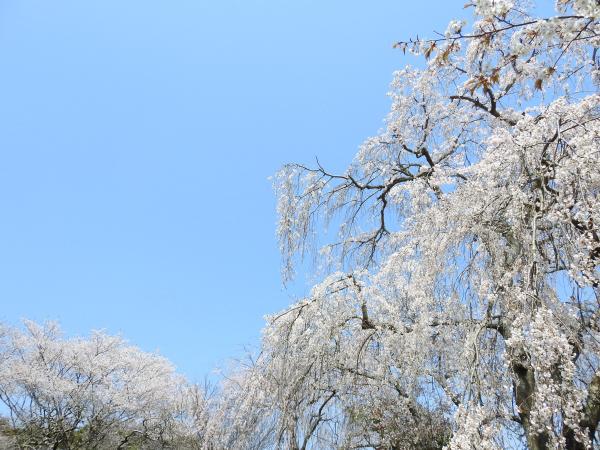 170414桜川_風土記の丘4