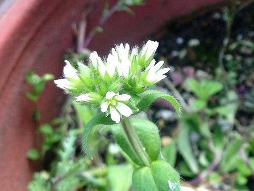 春の花170313