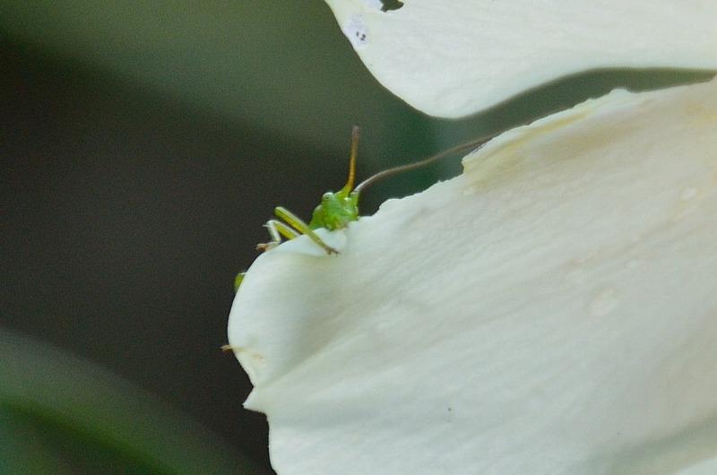 庭の花 (3)