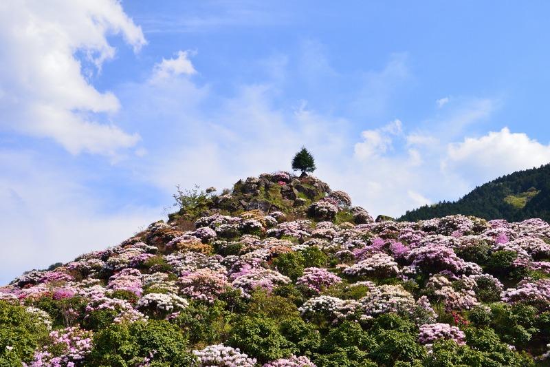 星の花公園 (1)