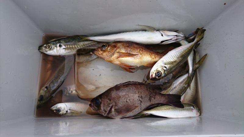 魚釣り (8)