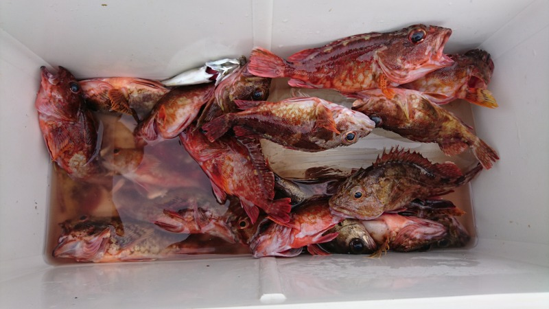 魚釣り (9)