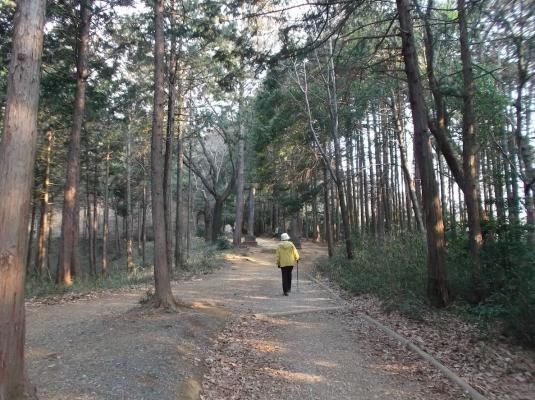 1、整備された歩きやすい道