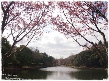 2017桜--1