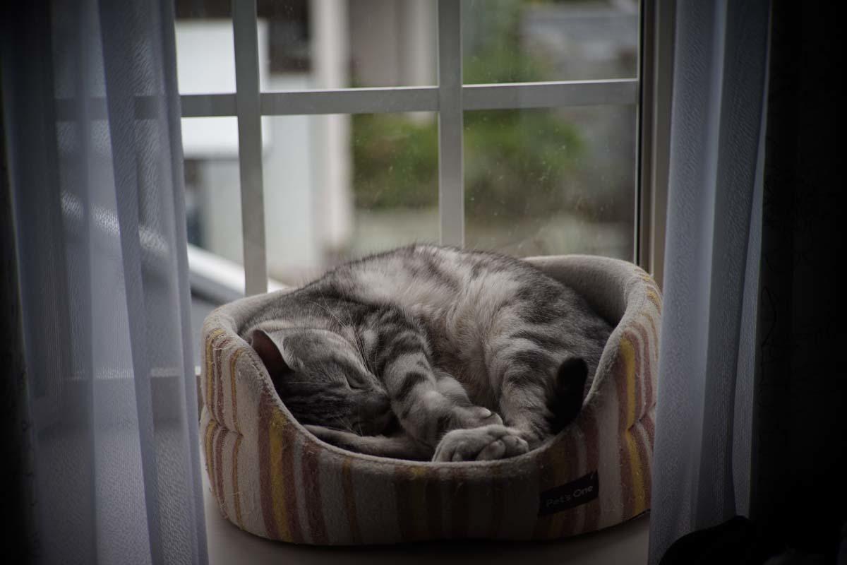 出窓ですやすや