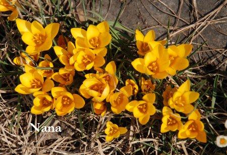 spring1-1_2017032922450326a.jpg