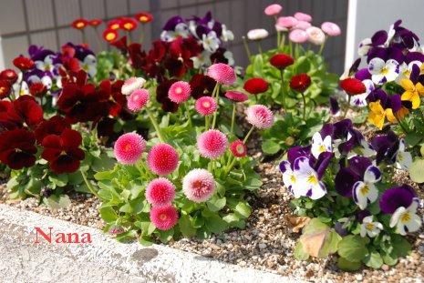 spring1-5_20170329224509669.jpg