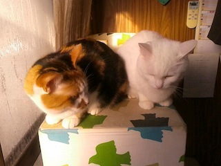 白猫組!?