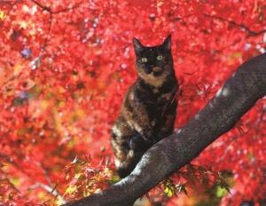 京都猫1_1
