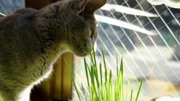 初めての猫草! その1 2