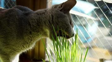 初めての猫草! その1 3