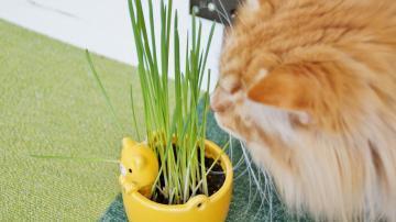 初めての猫草! その3 2