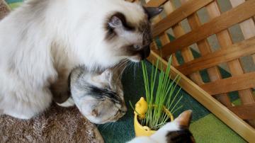 初めての猫草! その4 1