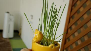 初めての猫草! その4 3