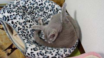 大きめな猫ソファー争奪戦! その3 1