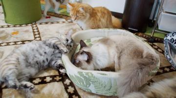 大きめな猫ソファー争奪戦! その3 2