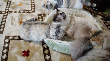 大きめな猫ソファー争奪戦! その4 1