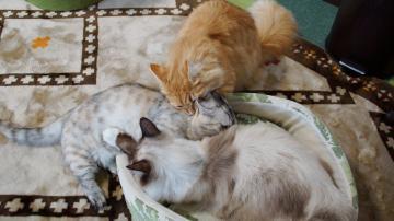 大きめな猫ソファー争奪戦! その4 3