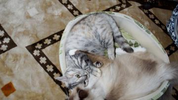 大きめな猫ソファー争奪戦! その5 1