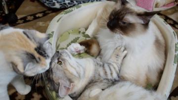 大きめな猫ソファー争奪戦! その5 6