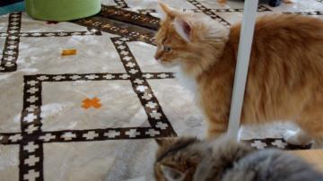 大きめな猫ソファー争奪戦! その6 1