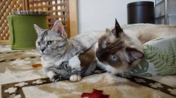 大きめな猫ソファー争奪戦! その6 2