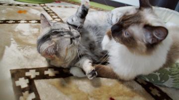 大きめな猫ソファー争奪戦! その6 3