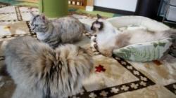 大きめな猫ソファー争奪戦! その7 1