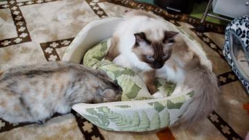 大きめな猫ソファー争奪戦! その7 2