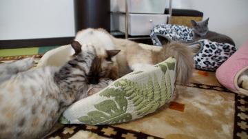 大きめな猫ソファー争奪戦! その7 3