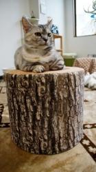 大きめな猫ソファー争奪戦! その7 7