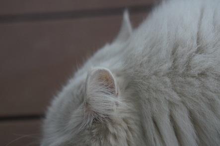 おしら's 耳