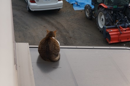 屋根の上のキジトラ猫