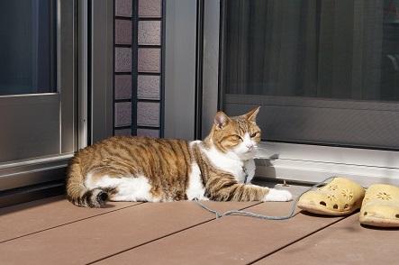 これ、2月の温かい日の画像(2017/02/25げな~)