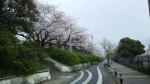 桜2-1704