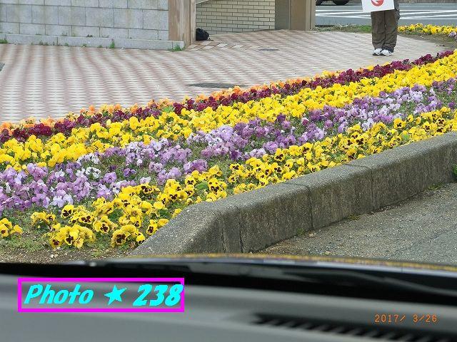 0326駅前の花
