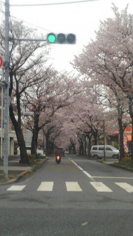 桜通り1492353790071