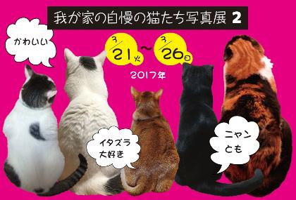 我が家の自慢の猫たち写真展2 ジャローナ