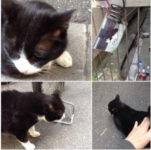 京橋の地域猫