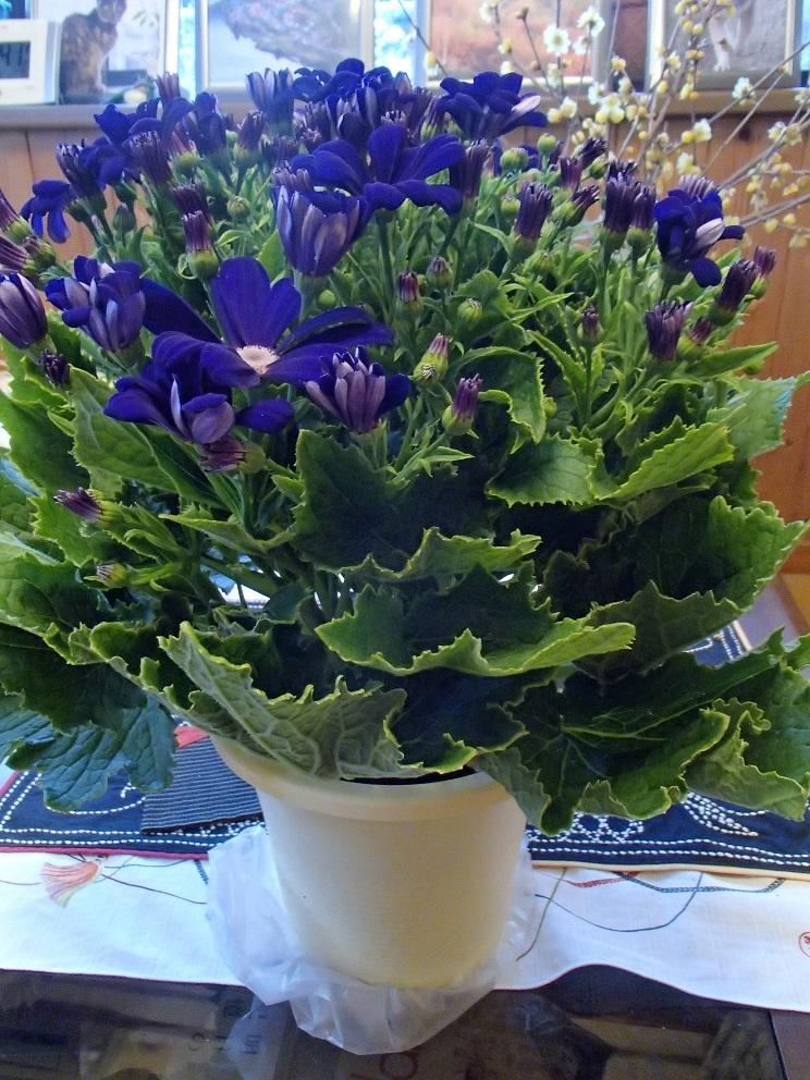 2017 2 22 紫の花 ブログ用.jpg