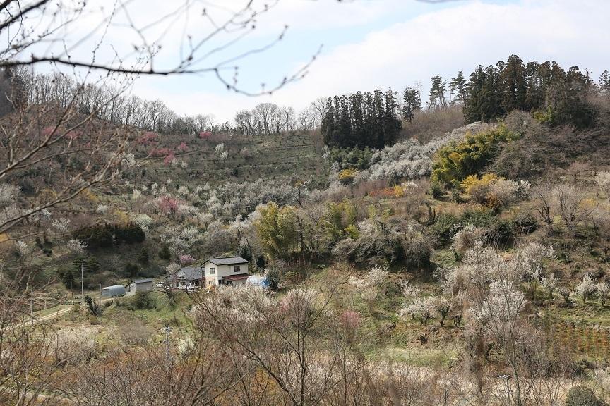 2017 4 2 花見山からの近景 ブログ用.jpg