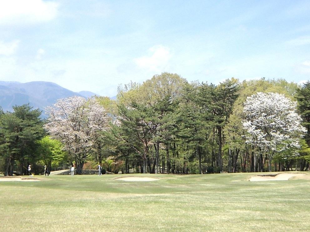 2017 5 4 ゴルフ場に山桜 ブログ用.jpg