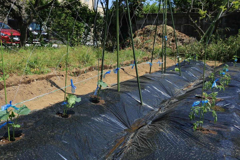 2017 5 5 夏野菜の植え付け ブログ用.jpg