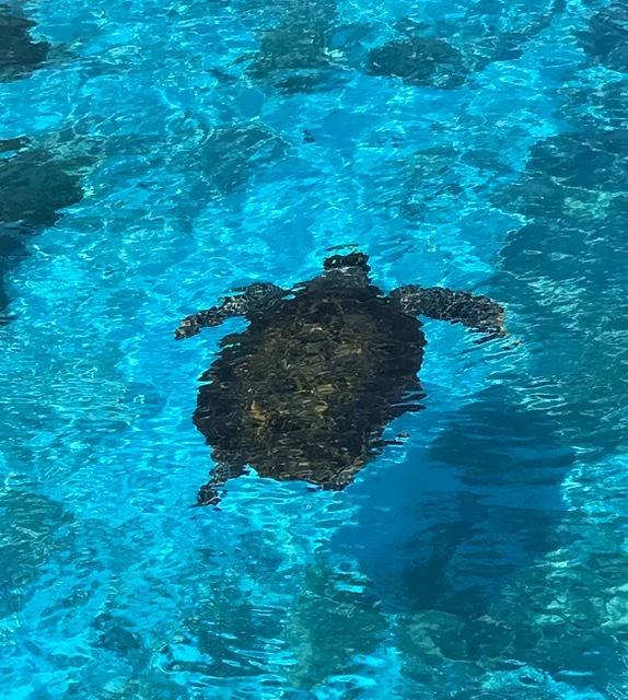 美ら海7カメ
