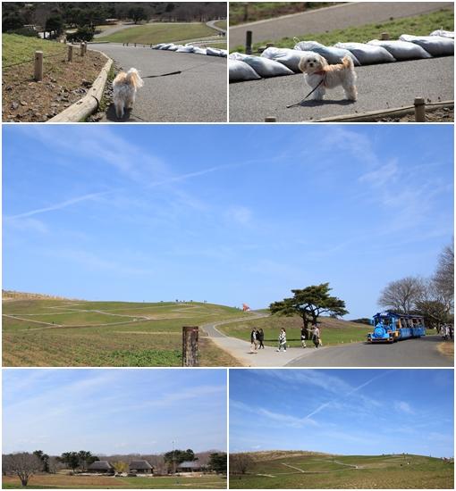 ネモフィラの丘② 3月25日2017