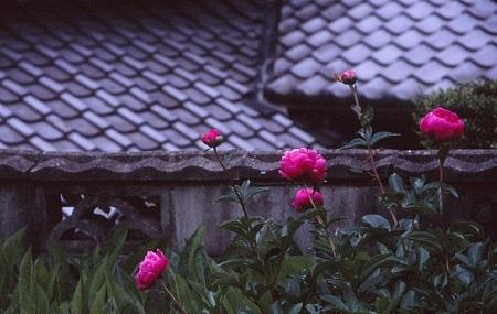 20170508_noririn.jpg