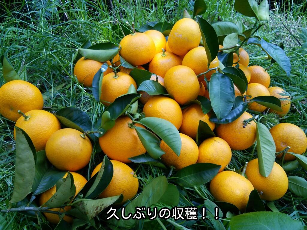 久しぶりの収穫!!
