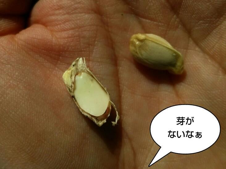 芽がないなぁ